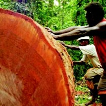 Forestry battle in the Solomons – Why you should buy Australian timber furniture.